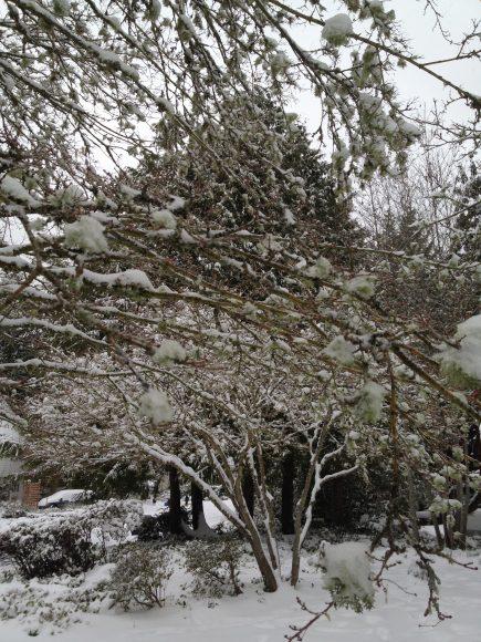 Snow on Bainbridge Island