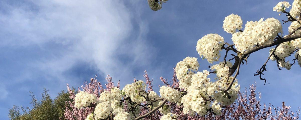 Spring on Bainbridge Island by Jen Pells Real Estate Agent