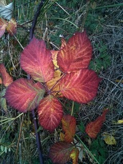 Foliage at Fort Ward State Park on Bainbridge Island.