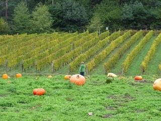 Suyematsu Pumpkin Patch on Bainbridge Island