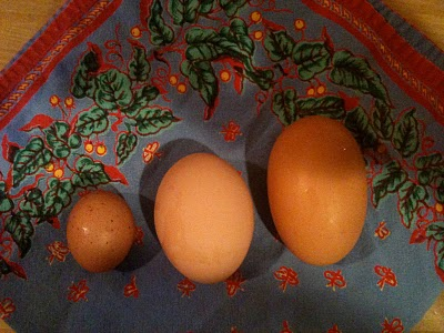 Eggs from our Chickens on Bainbridge Island