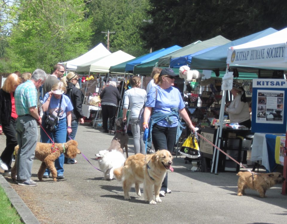 PAWS Wagfest taken by Jen Pells Real East agent on Bainbridge Island