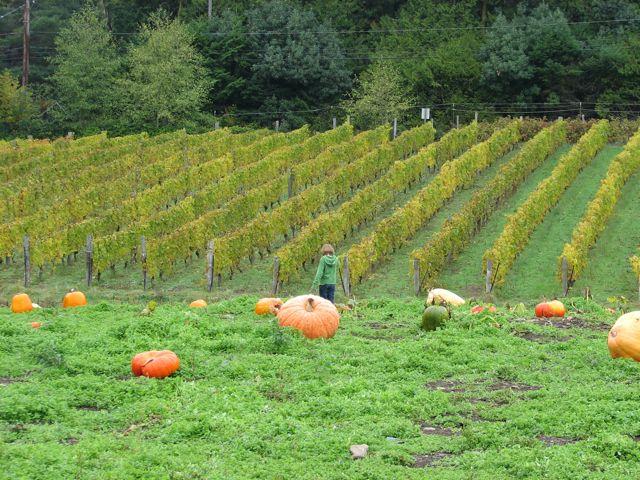 Pumpkin Patch locations on Bainbridge Island