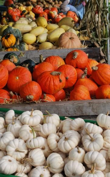 Things to do on Bainbrige in October. Suyematsu Pumpkin Patch on Bainbridge Island.