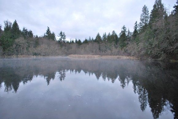 Misty Mac's Pond at IslandWood on Bainbridge.