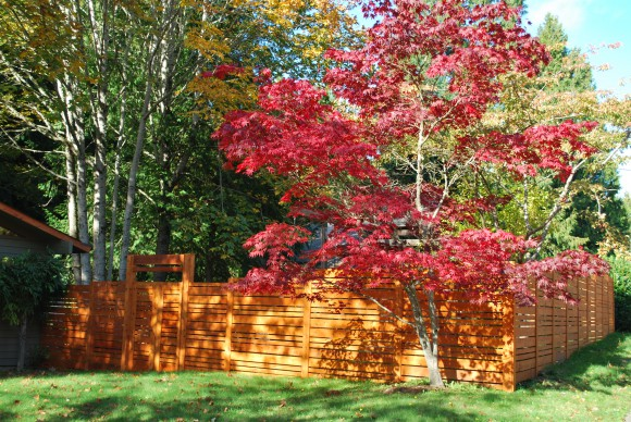 We love our new cedar fence.