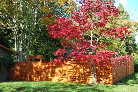 We love our new cedar fence.