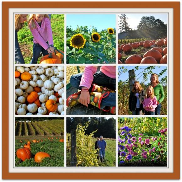 Suyematsu Pumpkin Patch Collage 2011