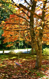 Fall on Bainbridge Island   Jen Pells   Realtor