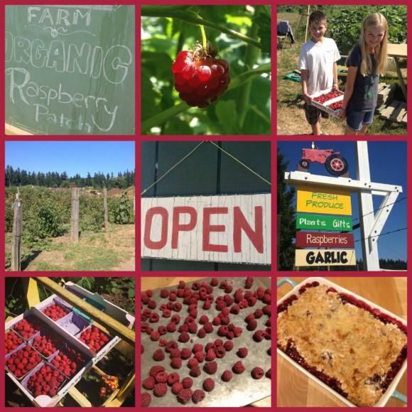 U-Pick raspberry collage - Bainbridge Island - photo by Jen Pells