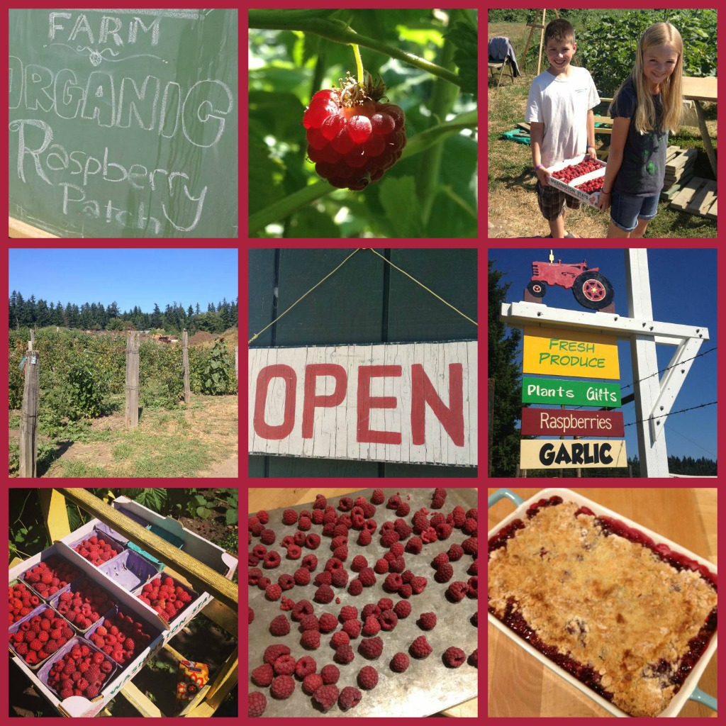 U-Pick raspberry collage - Bainbridge Island - photo by Jen Pells