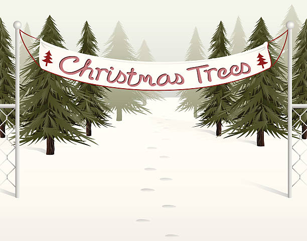 Christmas Tree Farms in Kitsap County