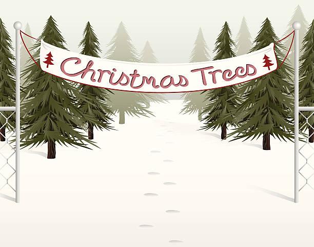 Christmas Tree Farms in Kitsap County