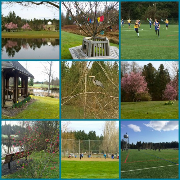 Spring at Battle Point Collage