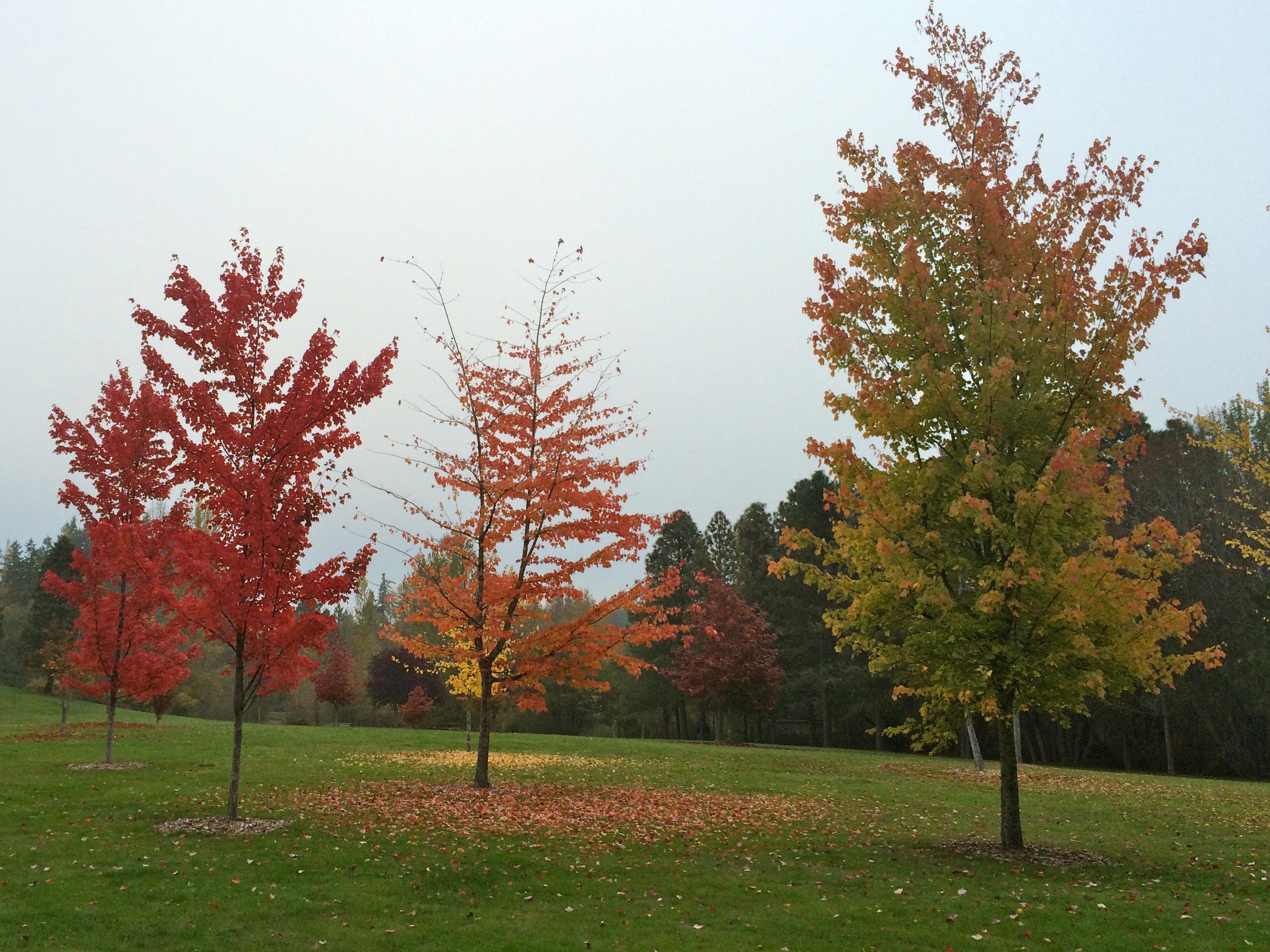 Fall on Bainbridge Island by Jen Pells