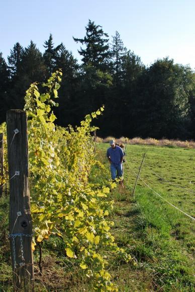 Wineries on Bainbridge Island